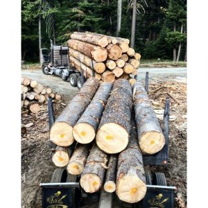 Vashon Island Firewood Source 3
