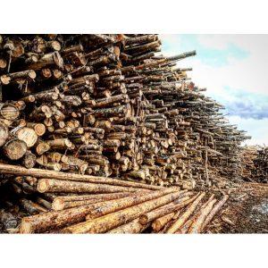 Vashon Island Firewood Yard 3